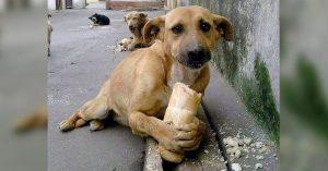 El abandono de perros no hace un mundo mejor